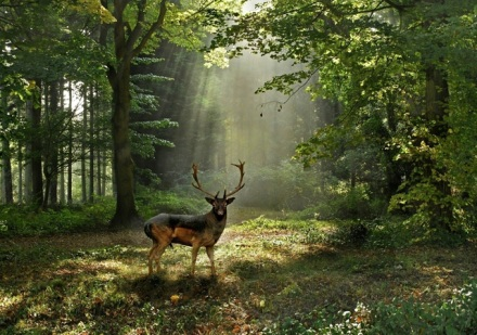 Cute Photographs of Deers06