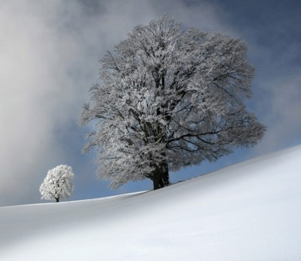 Beautiful Trees in Winter