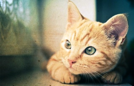 Cute Pet Cats (1)