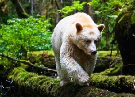 Cute Bear Images (9)