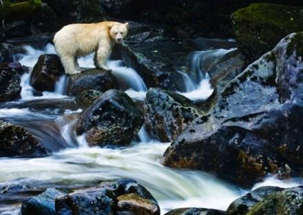 Cute Bear Images (8)