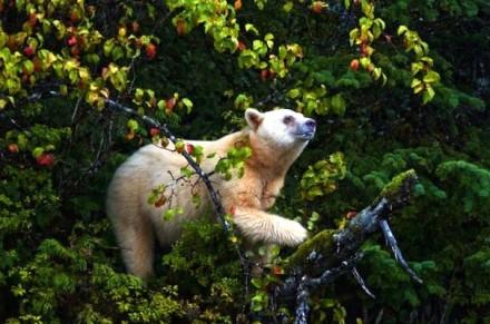 Cute Bear Images (5)