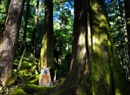 Cute Bear Images (3)