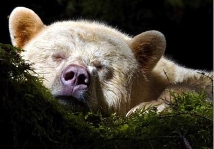 Cute Bear Images (1)