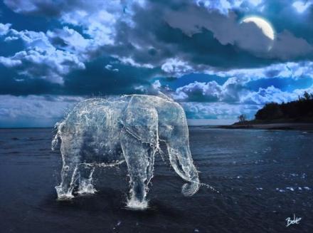liquid animals by boke 01 Liquid Animals