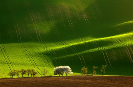 beautiful illustration of landscape photographs 9