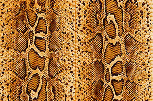 7.snake textures