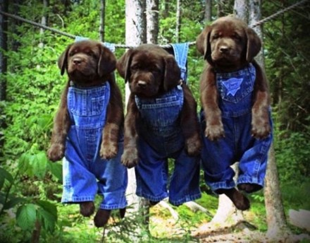 Cute Dogs Pics (6)