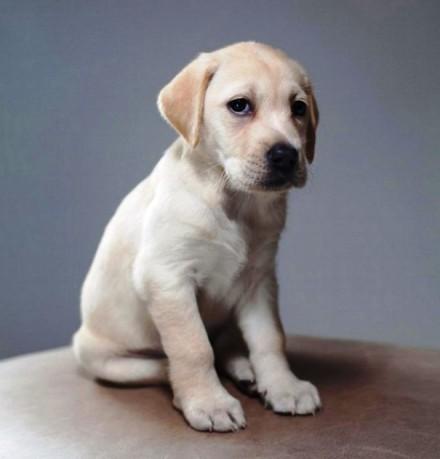 Cute Dogs Pics (11)