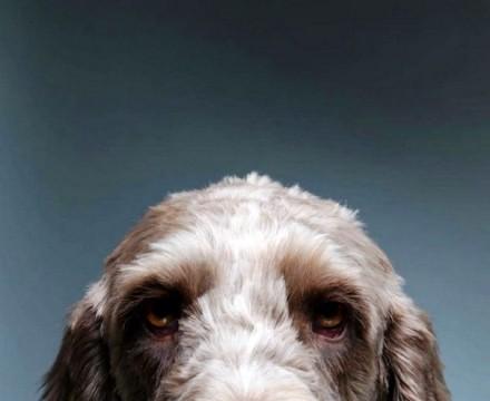 Cute Dogs Pics (8)
