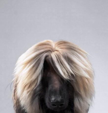 Cute Dogs Pics (7)