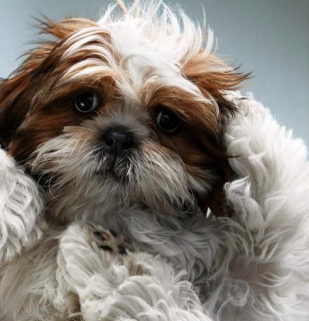 Cute Dogs Pics (5)