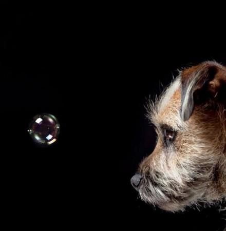 Cute Dogs Pics (4)