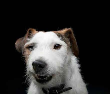 Cute Dogs Pics (2)